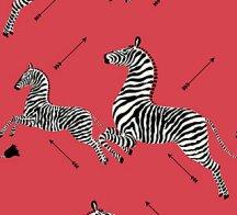 zebra - masai red