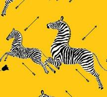 zebra - yellow