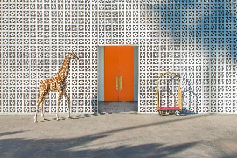 gray malin - giraffe